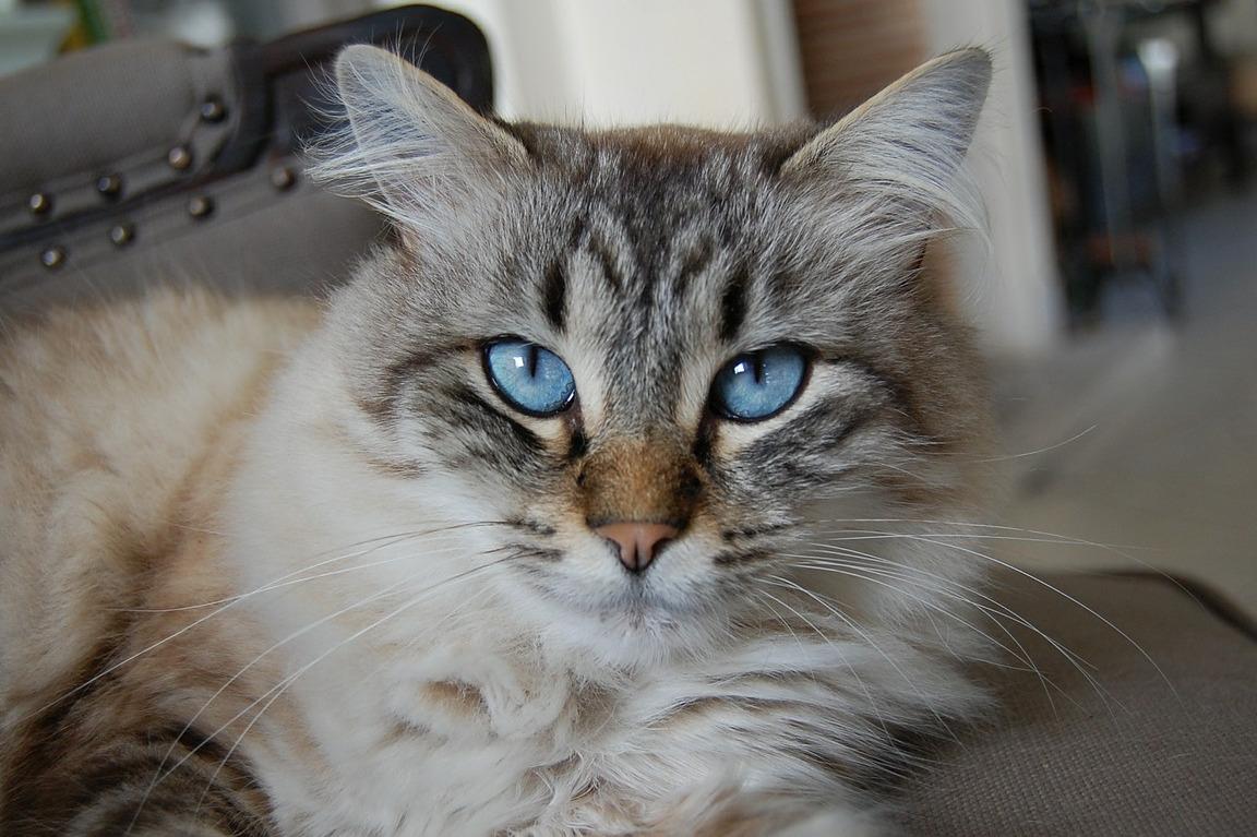Un chat qui s'appelle Socrate