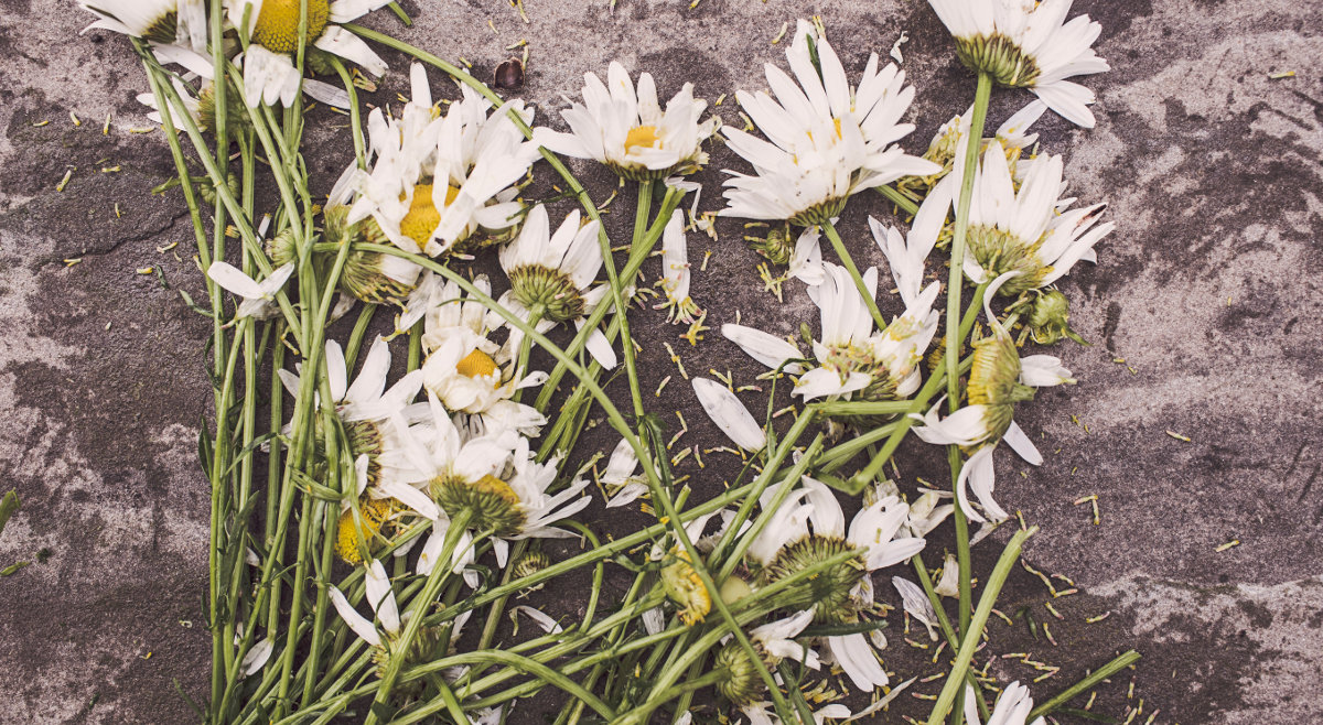 Fleurs Renversees