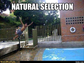 Selection Naturelle
